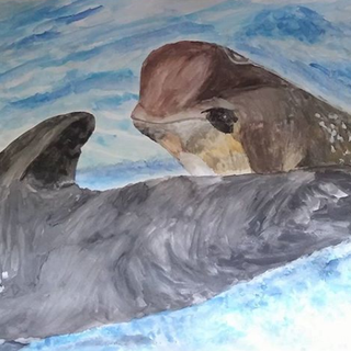 Pilot whale and calf