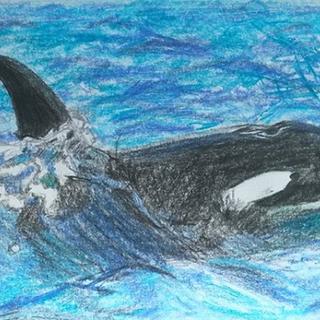 Orca NZ
