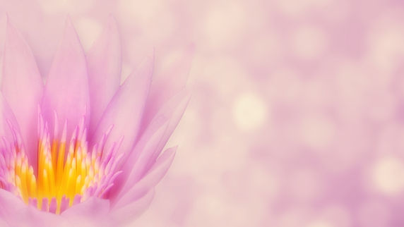 lotus-4228824.jpg