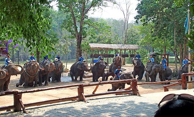 象保護センター,ช้าง,โรงพยาบาลช้าง,ศูนย์อนุรักษ์ช้างไทย,Thailand Elephant Conservation Center,ลำปาง, ランパーン,歴史,文化,観光,地図,祭り,行き方,伝統,ハリプンチャイ,北部,ラーンナー,陶器,ประเพณี, วัฒนธรรม, ประวัติศาสตร์ , เทศกาล, 世界遺産,ジャーマテウィ,ハリプンチャイ,鶏,鉄道,絶景,กาดกองต้า,ガートゴーンター,市場,ミャンマー,博物館,国立公園,スリン,象の日,ショー,象使い,体験,チェンマイ,象の村,タクラーン,動物園,Friends of the Asian Elephant,FAE