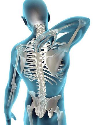 Coluna-vertebral1.jpg