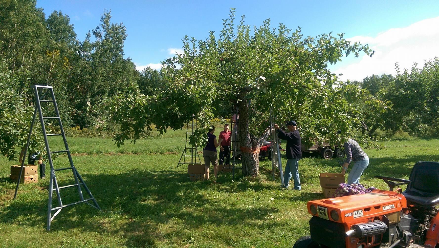 pommes01