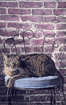Cat on Barstool