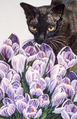 Tulip Cat