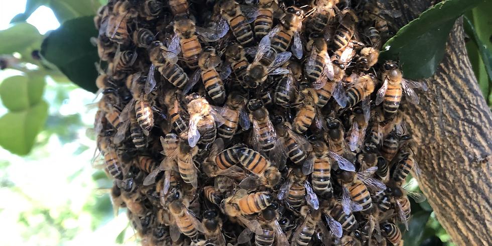 Intuitive Bee Stewardship
