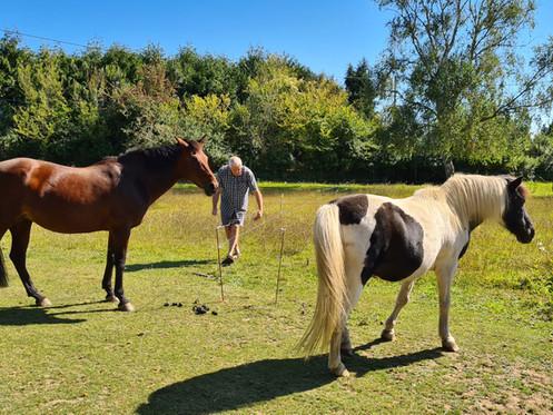 les poneys Pompon et Qazkoo