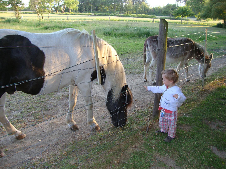 2 poneys et un âne