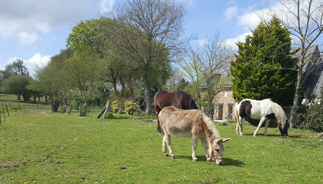 Dans le pré en face du gîte, les poneys et Justine, l'anesse