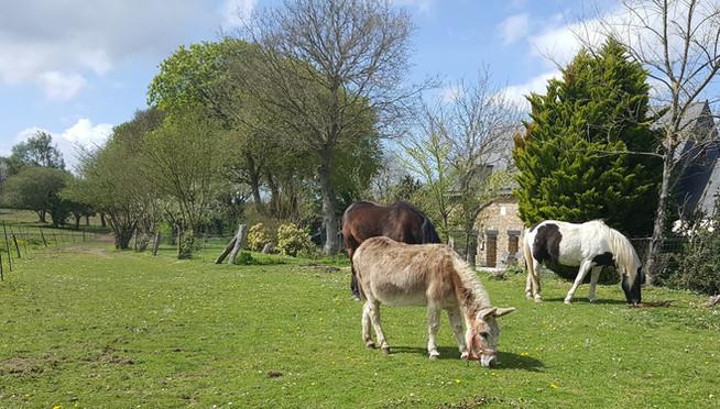 les poneys en face la maison