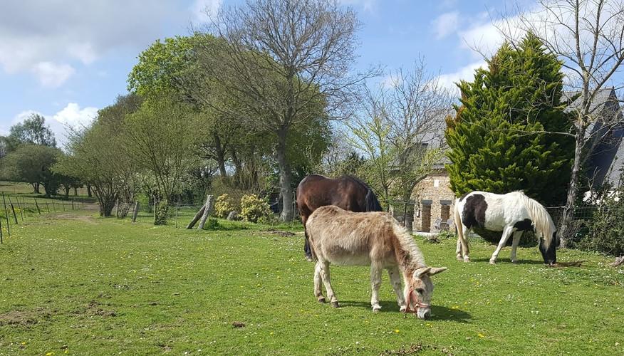 les poneys face à la maison