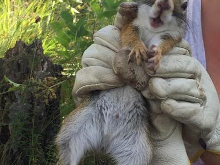 Squirrel 300!
