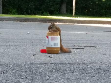 Cracked 250 squirrels!