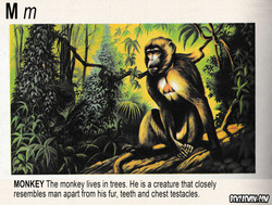 PICTURE DICTIONARY MONKEY