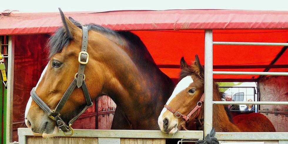 SESHA Autumn Heavy Horse & Foal Show