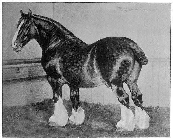 shire-horse-blythwood-conqueror-mary-eva