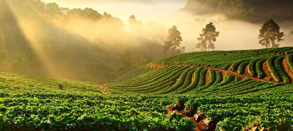 1-agriculture-slideshow-440.jpg