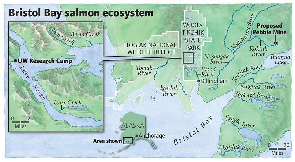 bristol bay salmon map pebble mine dillingham naknek