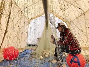 bristol bay alaska commercial salmon fishing deckhand hanging gillnet