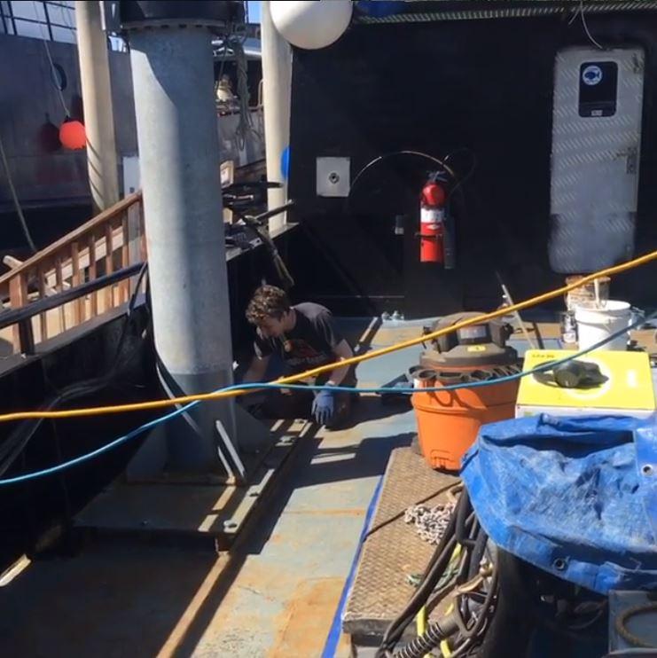 alaska salmon tender deckhand job