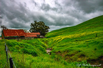 BARN #1 Livermore at Manning & Highland-Photograph