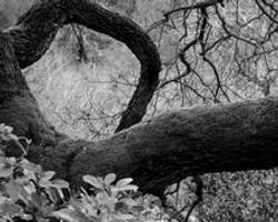 Jodi_Webber_BW_Photo_Through_The_Looking