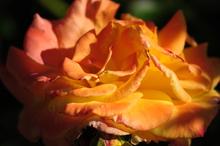 Macecilia_Santos_Color_Photo_Spring_Beau