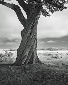 Lora_Salvador_BW_Photo_2nd_Solitude