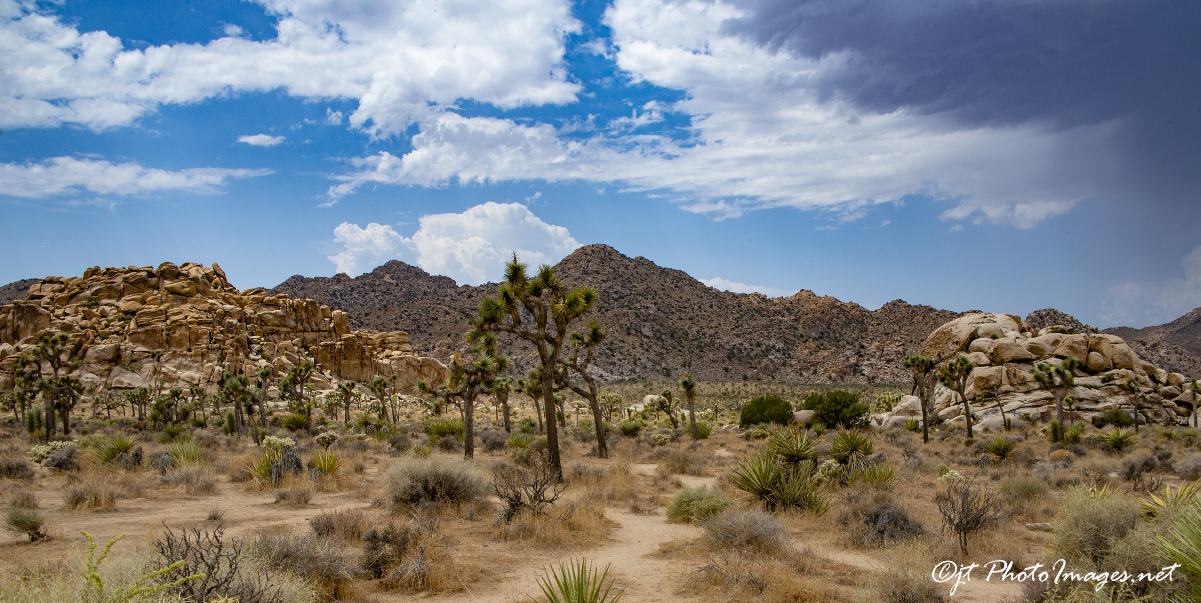 Joshua Tree National Park #2