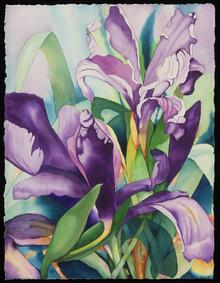 Carole_Fitzgerald_Watercolor_Douglas_Iri
