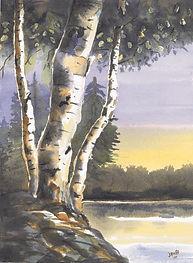 Sunset Birches.jpg