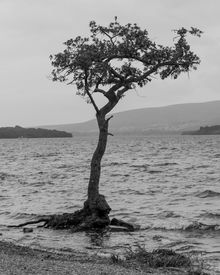 Jodi_Webber_BW_Photo_Lonely_Tree