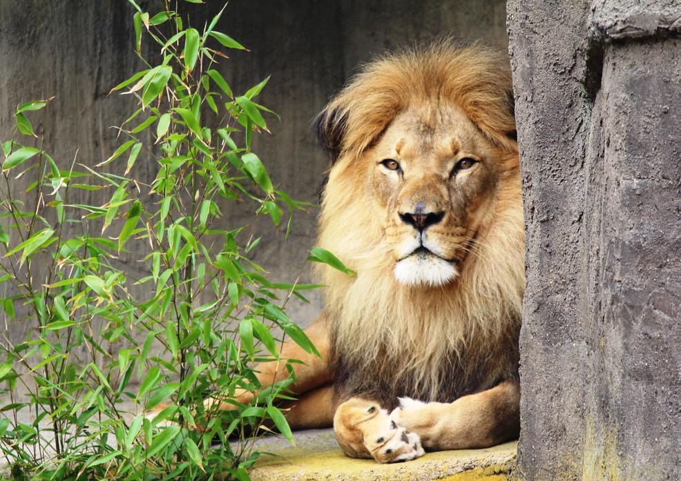 IMG_6967_lion.JPG