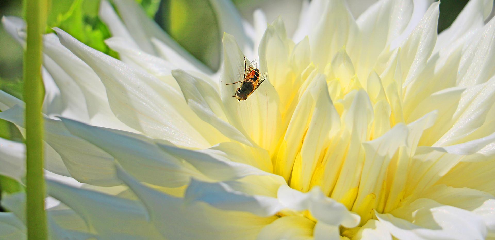 IMG_0078_2_Bee.jpg