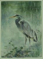 Blue Heron, Davis Arboretum