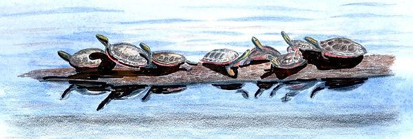 Basking Turtles.jpg