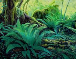Ken_Chew_Oil_1st_Rain-Forest