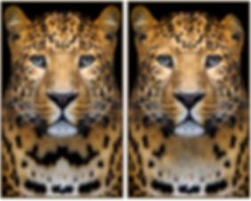 picdiff_leopard_v4_3diff_00.jpg