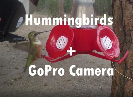 Hummingbirds Visiting Us Daily