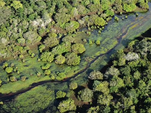 A governança de uma organização para observar a gestão de aguas do Brasil