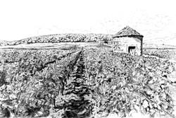 Vignes et cabotte