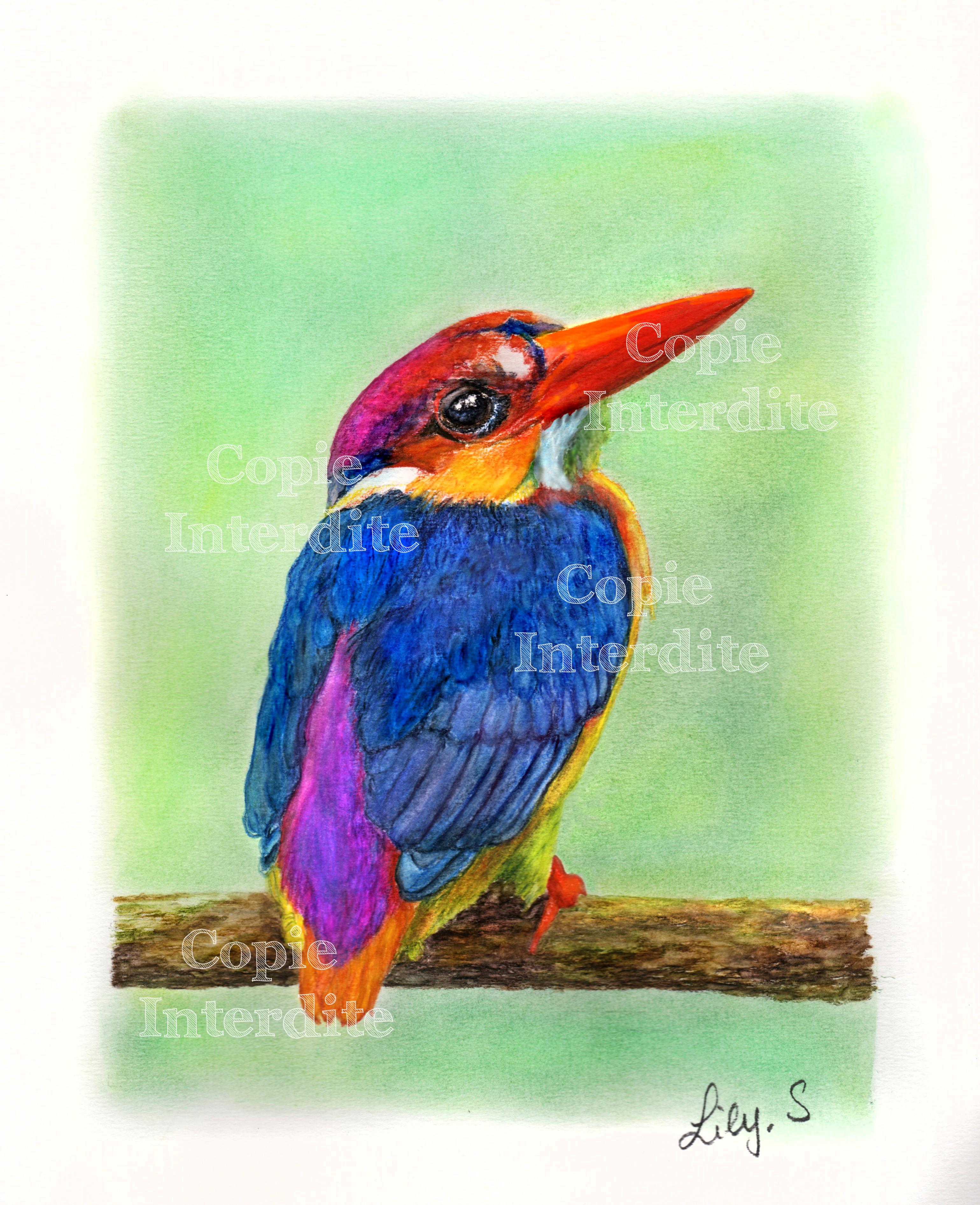 plumage multicolore