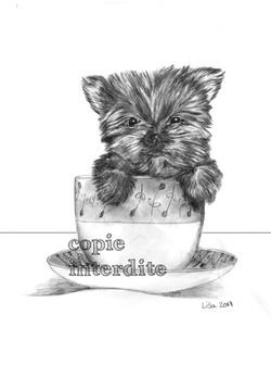 Petit bébé chien