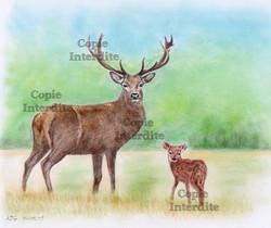 Le cerf et son fils