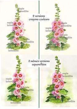 Roses tremières