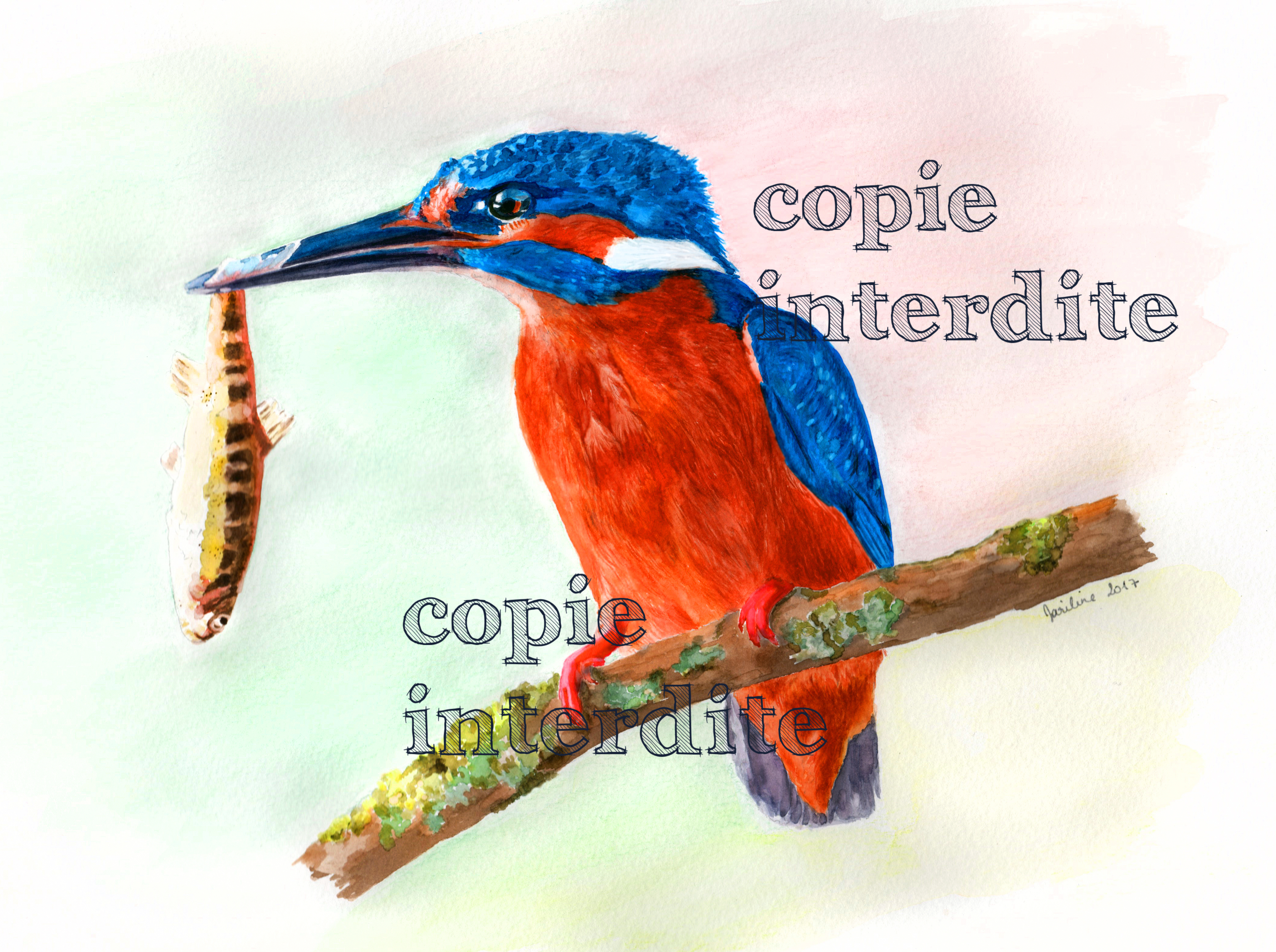 le plumage coloré du martin pêcheur