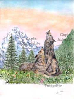 loups de montagne