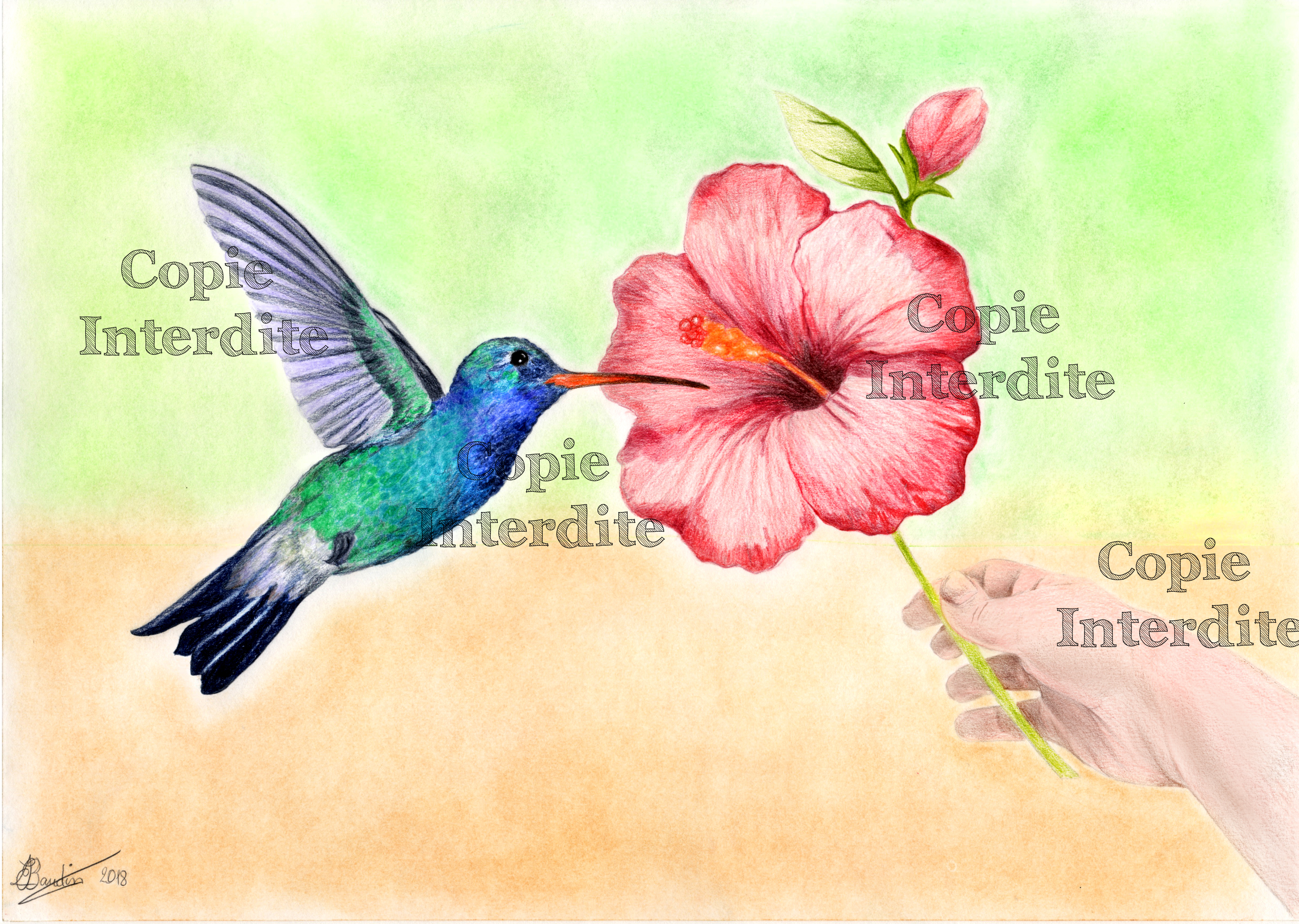 couleurs nature