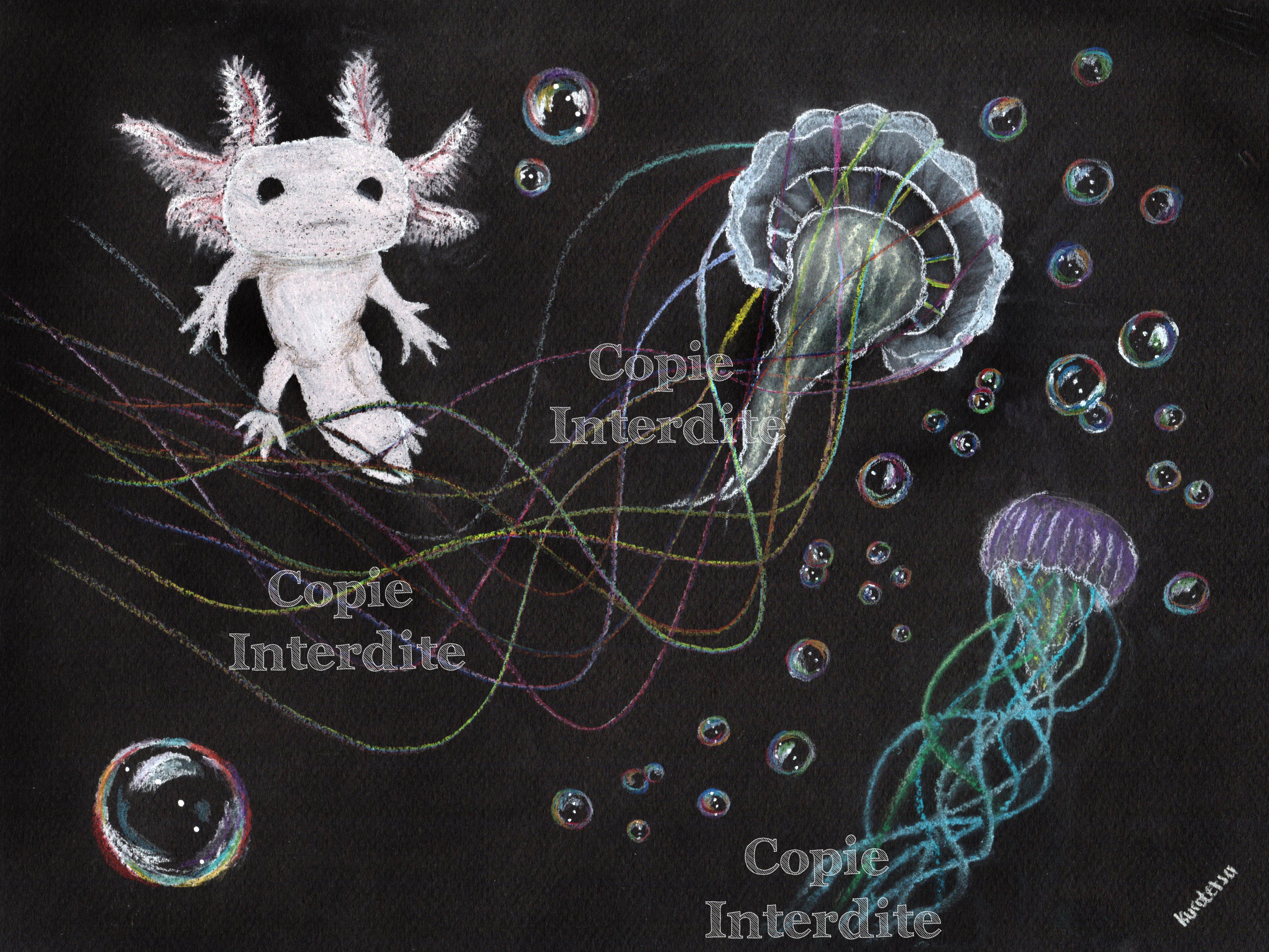 Méduses et axolotl
