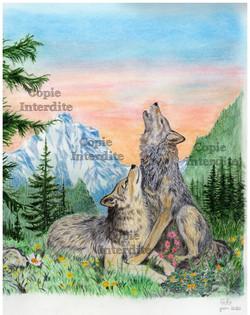 les loups en montagne