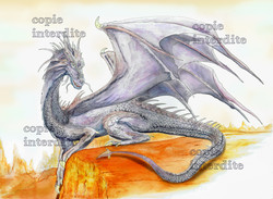 Le dragon solitaire